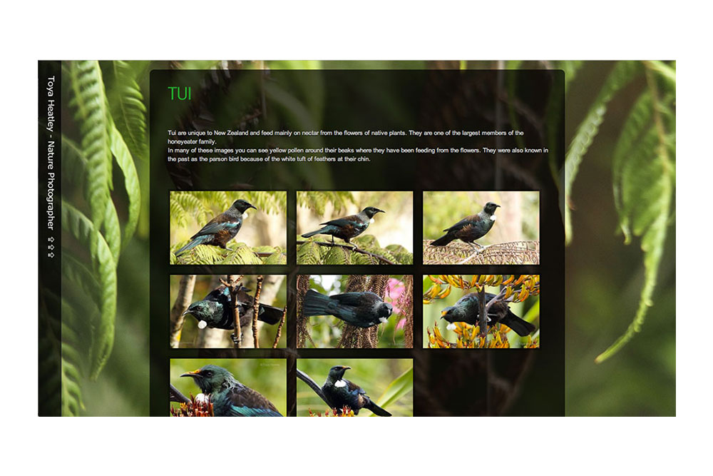The ToyaHeatley.com Gallery Of Tui Pictures.