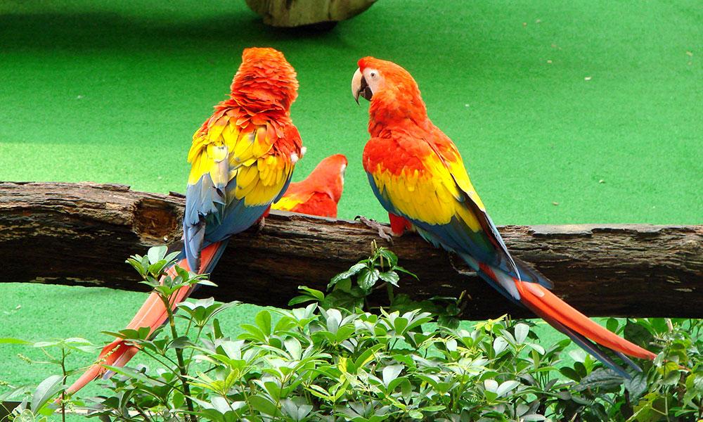 Contact Bird Talk 1339987